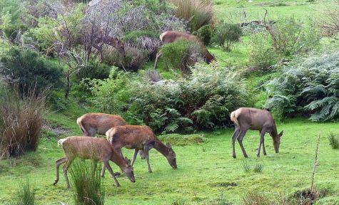 Local deer paddock (no guns here)